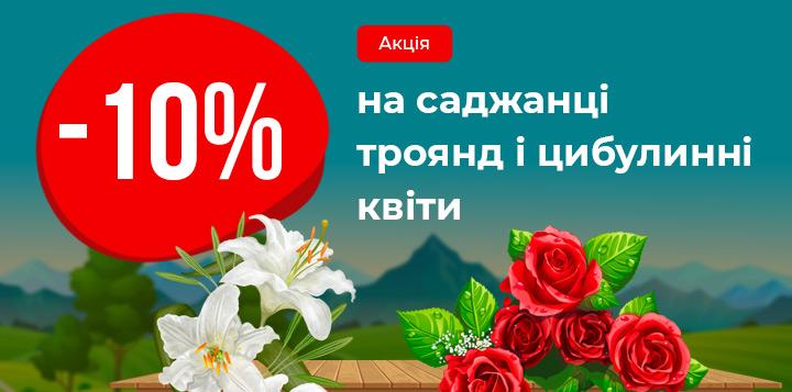 -10% на саджанці троянд і цибулинні квіти