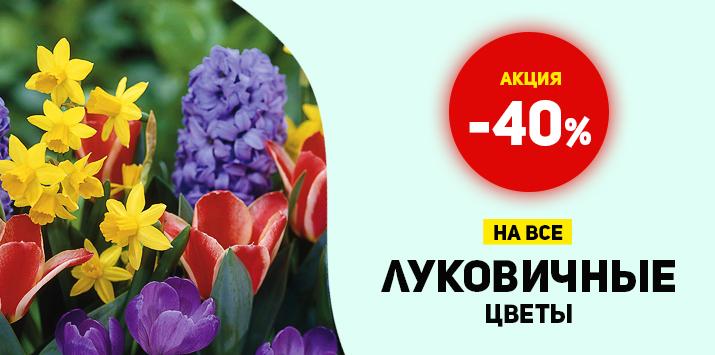 -40% на все луковичные цветы - Мега распродажа!