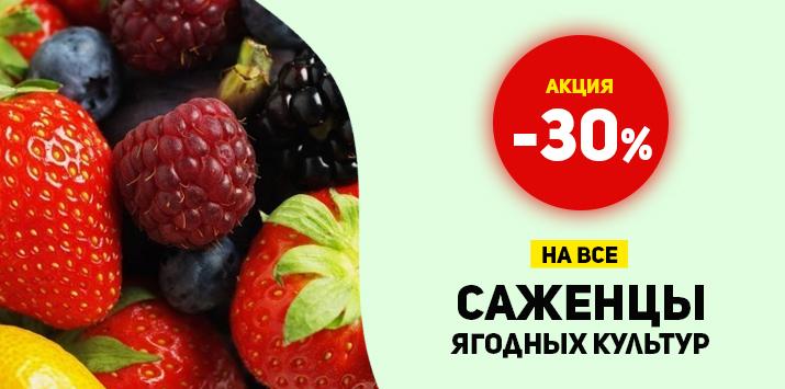 -30% на все саженцы ягодных культур - Мега распродажа!