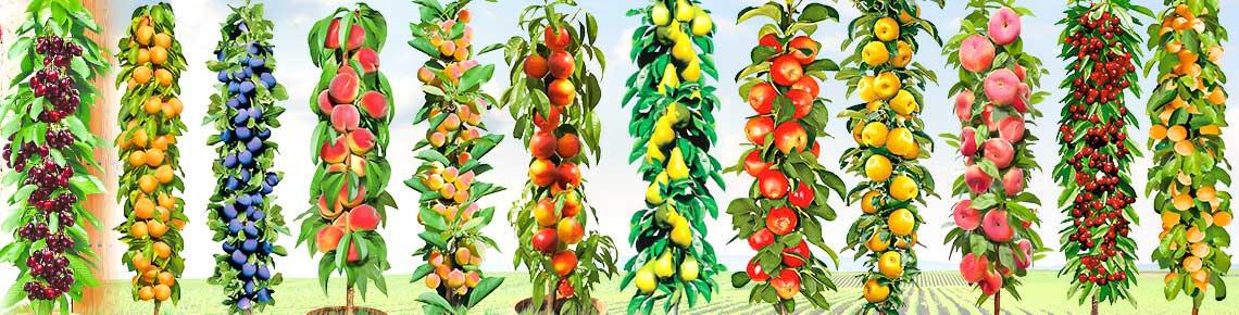 Яблоня колоновидная, выбираем сорт