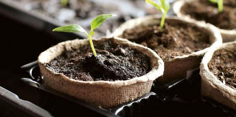 Знижка на товари для вирощування розсади -15%