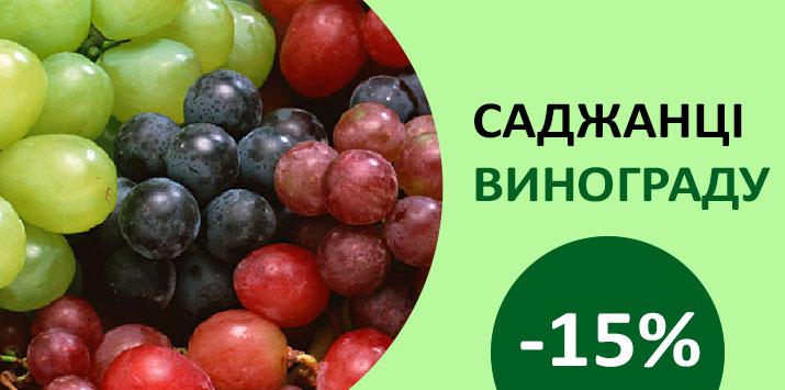 Знижка на саджанці винограду -15%
