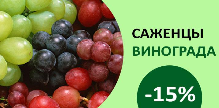 Скидка на саженцы винограда -15%