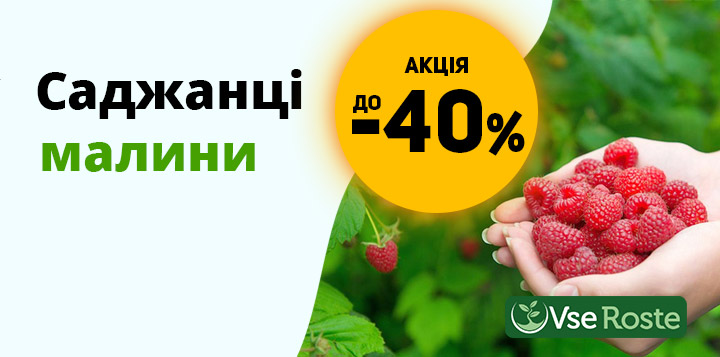 Знижка на саджанці малини до -40%