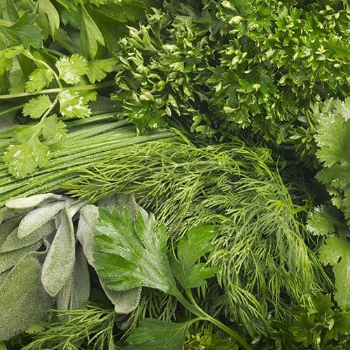 Пряні та зелені культури
