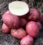 Картофель семенной Кристина 5 кг 1