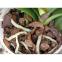 Субстрат Для орхідей, 2 л, (проз, пакет), Кардаш 1