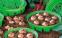 Корзина для высадки луковиц, круглая d27 см 0