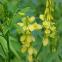 Буркун желтый 10 кг, Украина 0