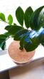 Приствольный кокосовый круг, d 25 см 1