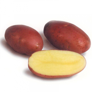 Картопля насіннева Лабелла 5 кг, Solana