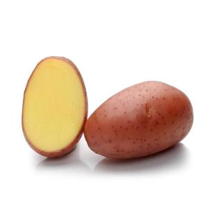 Картопля насіннева Ред Леді 5 кг, Solana