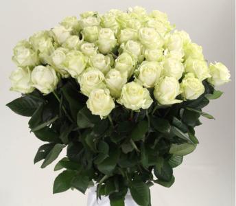 Роза чайно-гибридная Аваланж (Avalanche)