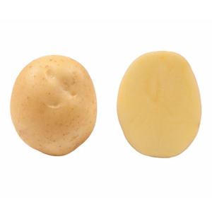 Картофель семенной Орла 5 кг