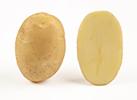Картофель семенной Бюррен 5 кг, Овощной Дом